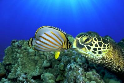 OCEANWORLD 3D - Still 1